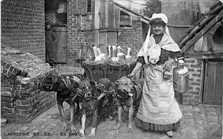 Dogs pulling milk cart
