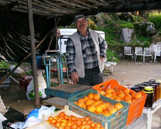 Jpg 010 oranges abound on the roadside